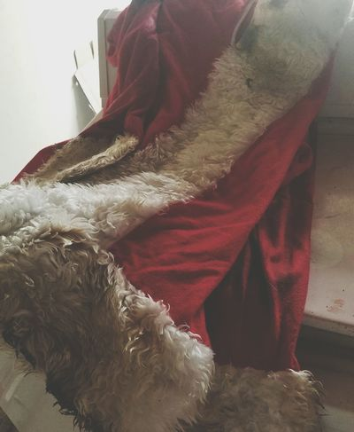 Christmas X-mas Xmas Holiday Winter December Santa Suit Redsuit Red Fur Cold Dirty Washer Mrs. Claus Children Story Believe Magic Season  Spirit Festive Jolly Holly Christian Holiday POV