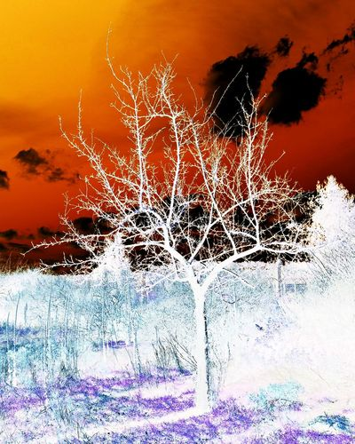 Abstract tree in nature garden Abstract Abstract Photography Abstractart Surreal Surrealist Art Negative Effect Negativeart Phantasie Phantasy No People Outdoors Sunset Close-up Sky Nature Day