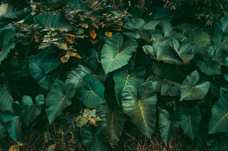 Abundance Beauty In Nature Botany Close-up Day Field First Eyeem Photo Freshness Full Frame Green Color Growth High Angle View Land Leaf Leaves Nature No People Outdoors Plant Plant Part