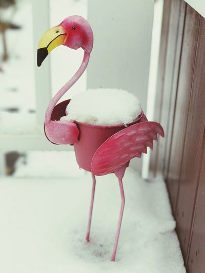 Pink Flamingo in the Snow Snow Covered Pink Planter Pink Pop Of Pink Day Close-up Perching Animals In The Wild Pink Color Animal Themes Flamingo No People One Animal White Color Bird Pink Flamingo Snow Snow Covered Deck Pretty In Pink Porch Planter Shades Of Winter
