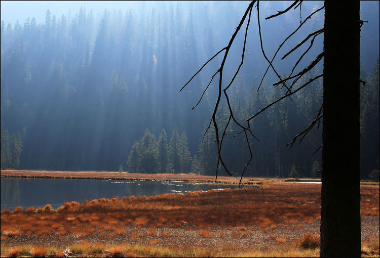 Arbersee Bayrischer Wald Tree Plant Tranquility Tranquil Scene Forest Beauty In Nature Land Nature Water Scenics - Nature Non-urban Scene Lake No People Fog Landscape Environment Day Remote Outdoors WoodLand Change Hazy