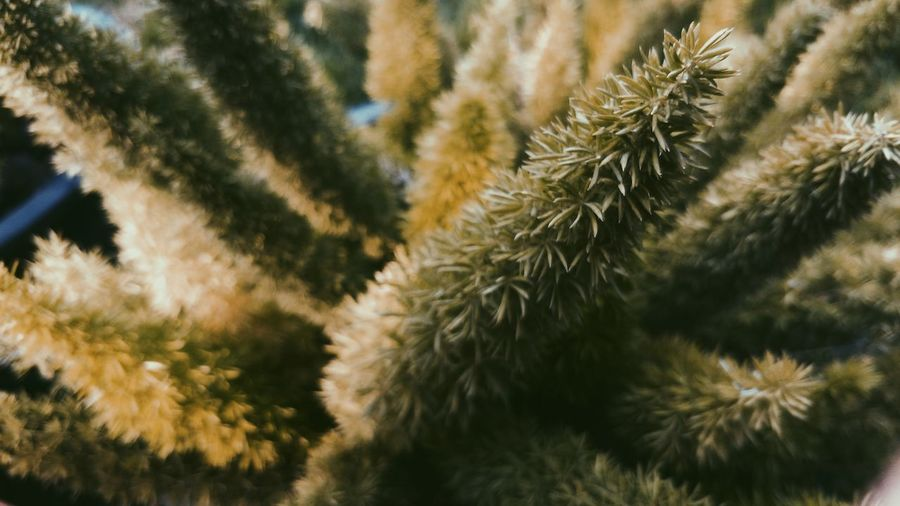 Close-up of cactus plant during winter