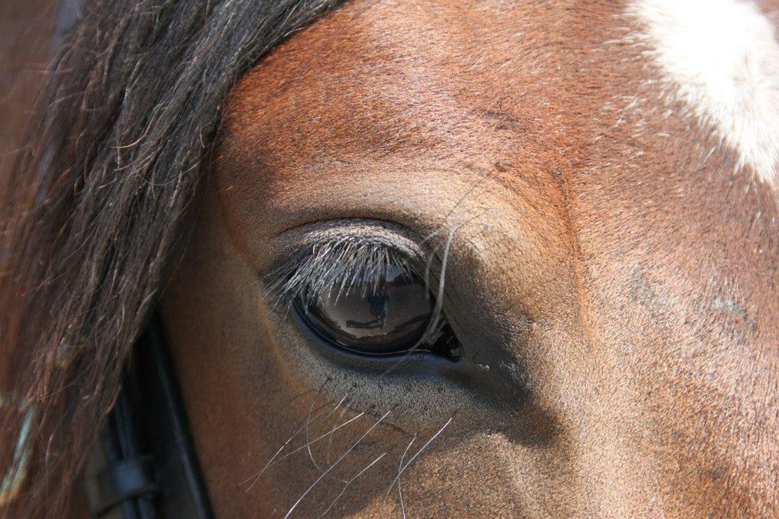 close-up, horse, part of, portrait, looking at camera, animal body part, headshot, one animal, animal themes, mammal, animal head, domestic animals, human face, front view, indoors, human eye, animal eye