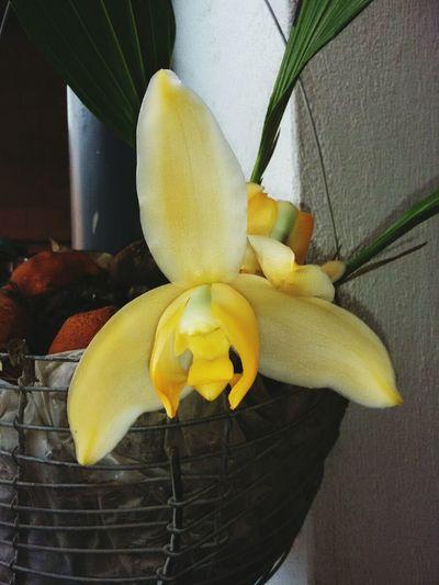 Orquídea Flor Plants Linda Orquídea Orquídea❤ Naturaleza