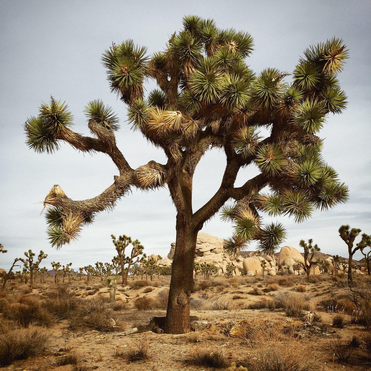 Arid Climate, Beauty In Nature, Boulder - Rock, Bush, Close-up