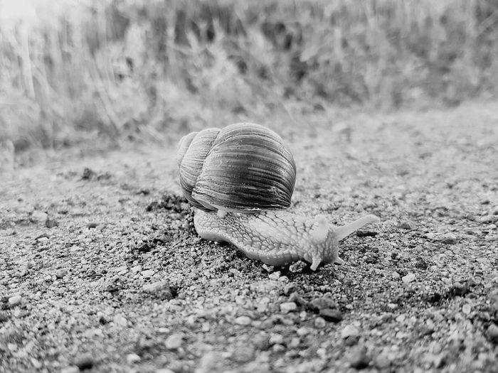 Snail Snail🐌 Walking Around Nature Animals Nature_collection Nature The Week On EyeEm