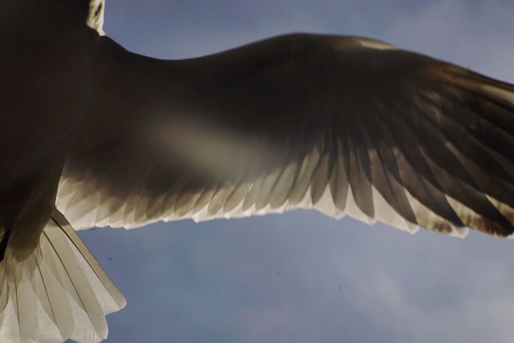 Low angle view of bird against sky