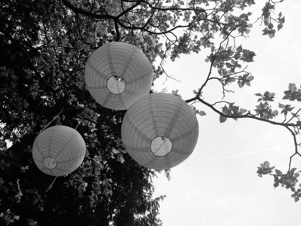 Evanstobin Wedding Paperlantern Paperlanterns Paper Lanterns Blackandwhite