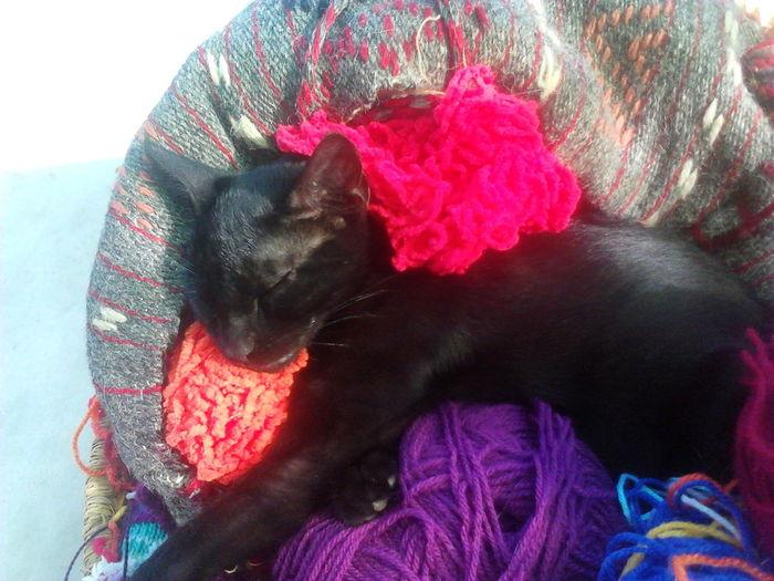 Chimp, as a kitten, sleeping in my knitting bag Chimp The Cat Cat In My Bag Black Kitty Cat Catsofeyem Kitten Black Kitten Knitting