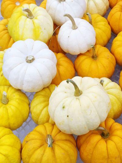 Colorful pumpkins at the produce market. Taking Photos Shot By IPhone6s Plus Januaryphotochallenge IPS2016Composition Pumpkins Vegtables IPS2016White