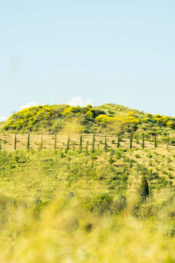 #cypress