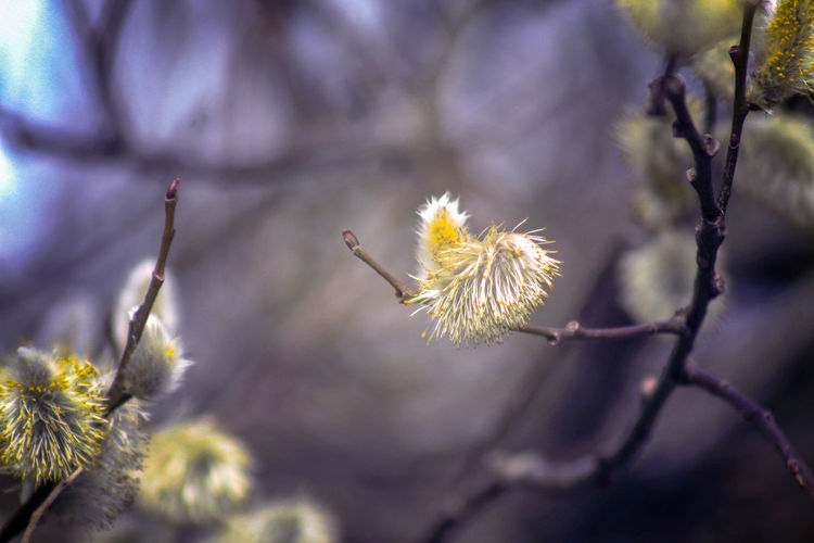 Pussywillow Tree Springtime EyeEm Best Shots EyeEm Nature Lover EyeEmBestPics Beauty In Nature EyeEm Best Shots - Nature Wonders Of Nature Lakeside Flower Flower Head Uncultivated Natural Parkland Close-up Plant Animal Themes Flowering Plant Wildflower Botany