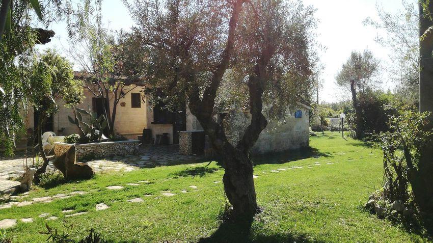 B&b... Tree Nature No People Outdoors Grass Day Architecture Puglia My Love Southitaly Castellaneta(TA-Italy) Italy❤️ Long Goodbye