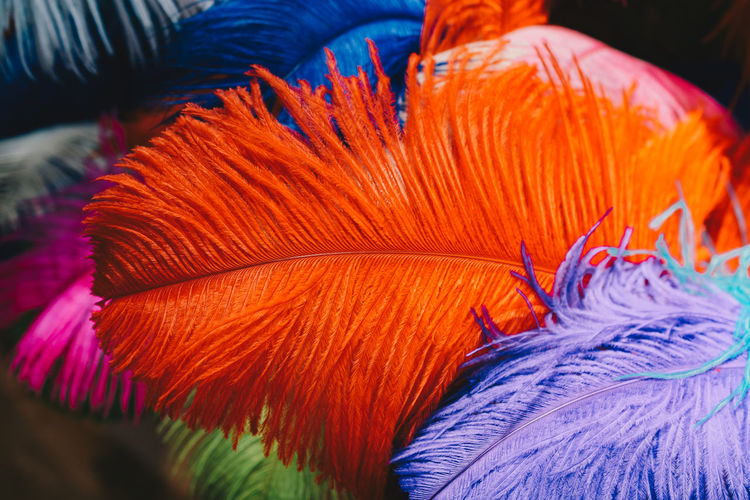 Close-up of orange feathers