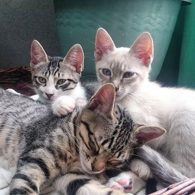 So, wir haben mittlerweile die Pässe der 5 erhalten und eine große Transportbox gekauft. Heute Abend geht's nochmal zum Tierarzt wegen einer Reisetauglichkeitsbescheinigung und dann sind wir bereit für den Flug am Dienstag. Blanco_the_cat Echo_the_cat Rayado_the_cat