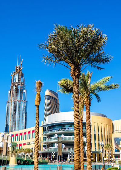 Low angle view of palm tree against buildings