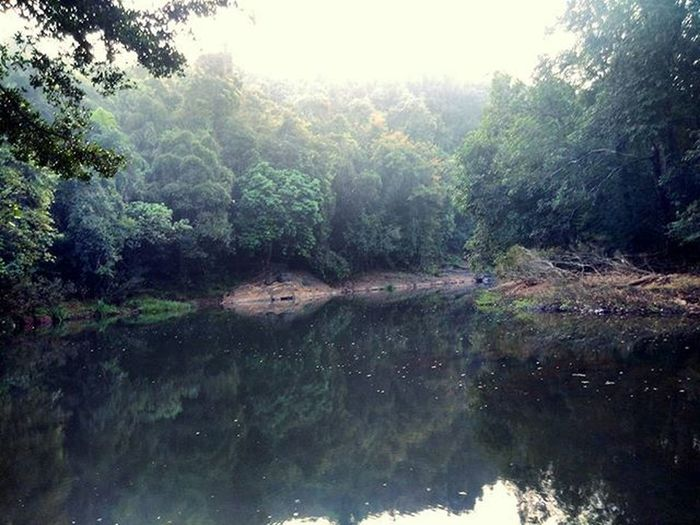 Anejari Butterfly Camp, Kollur Kundapura Udupi Karnataka Nature Forest Lake Morning