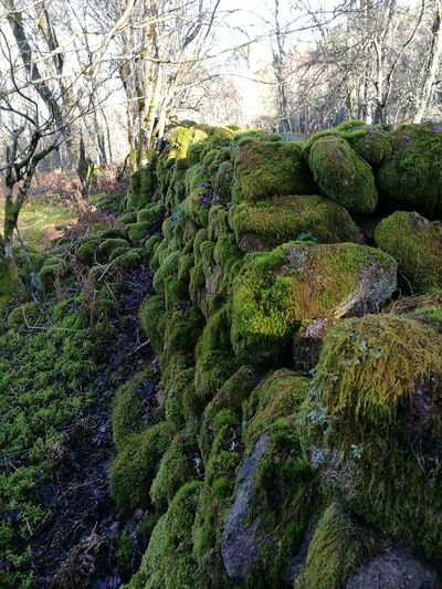 Miles Of Moss Moss On Rock Mossporn Beauty In Nature Outdoors Nature Freshness Green Color Purist No Edit No Filter