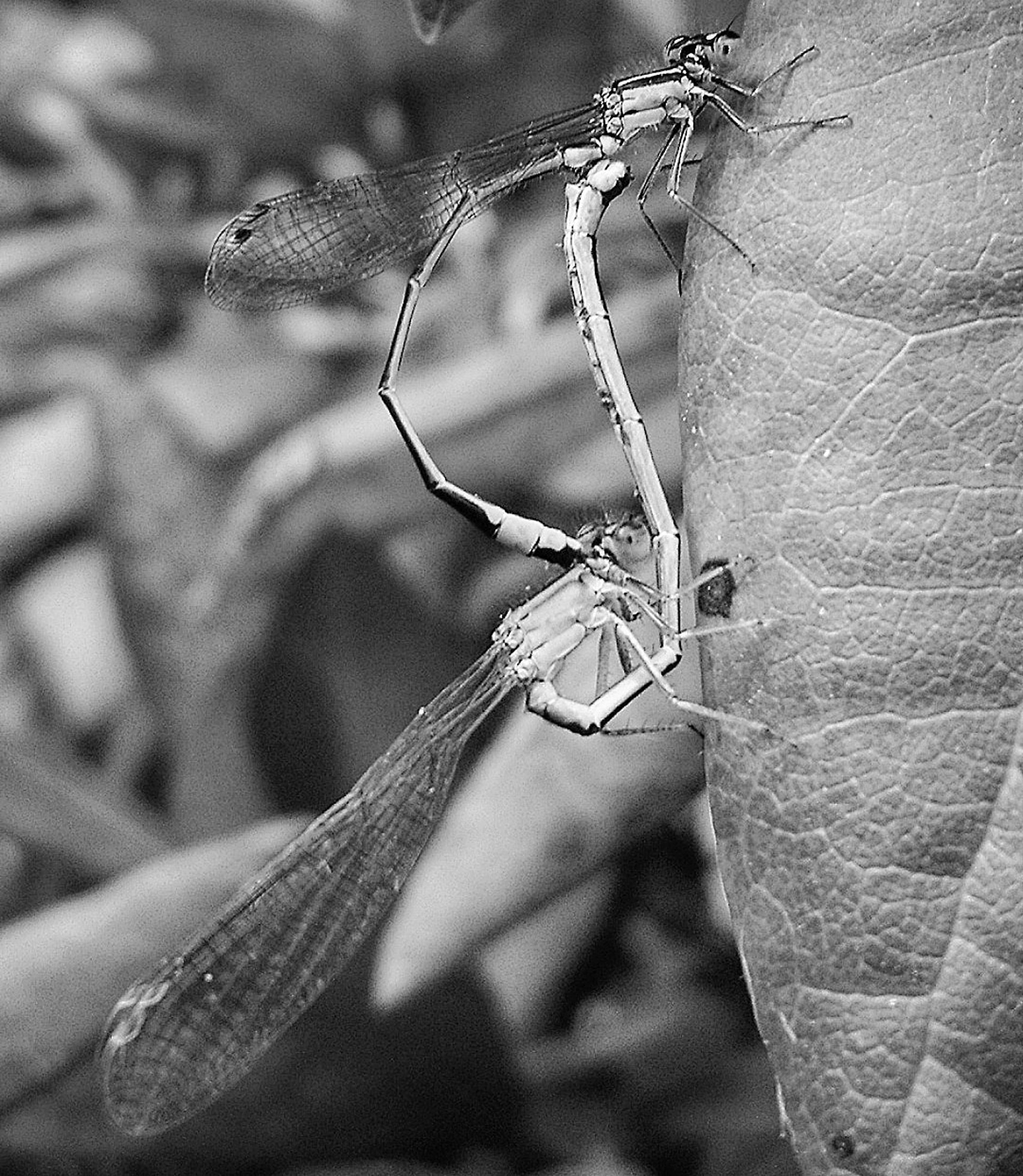 animals in the wild, close-up, insect, animal wildlife, focus on foreground, invertebrate, one animal, animal themes, animal, day, no people, plant, nature, plant part, leaf, outdoors, selective focus, praying mantis, animal body part, beauty in nature, tangled