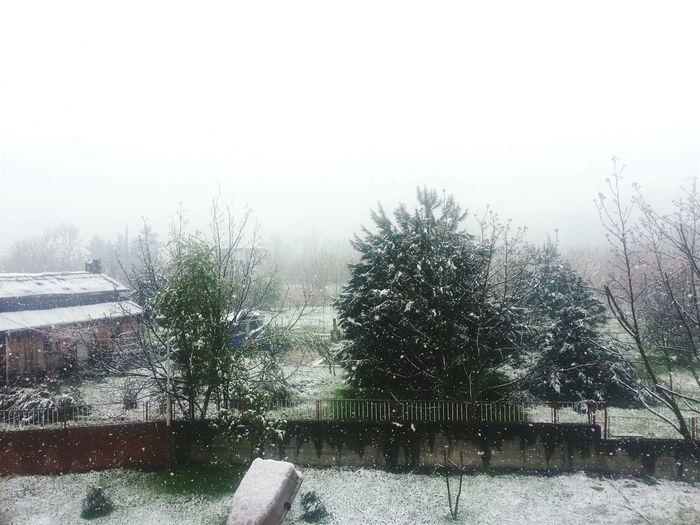 April The Snow  Cold Hi!