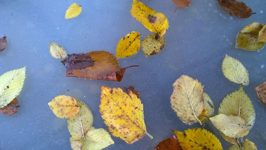 High angle view of autumn leaves on glass table