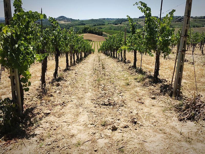 Tuscany Landscape Cinque Terre San Gimignano Winery View Winery Photography Wine Country Italy Wine Italy Wine Farm Winery Tour Winery View Vineyard Tuscany Winery Italy EyeEmNewHere Summer Exploratorium