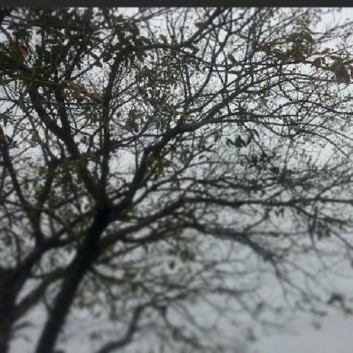 TreePorn Grimville Wicked Igdc darkness trees igpics nature lookingup unusual