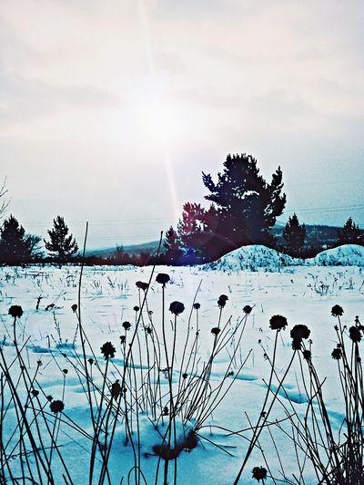 Forestshot Snow Relaxing Buryatia, Russia, Ulan-Ude