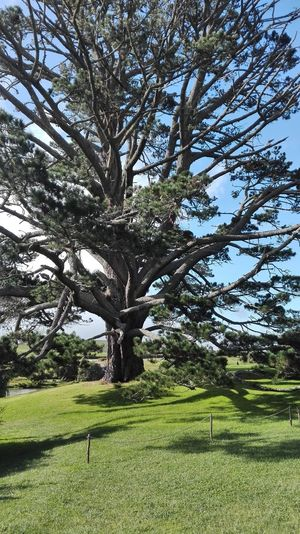 Hobbit LOTR LOTR Tour Beauty In Nature Branch Day Grass Green Color Growth Hobbit Field Hobbiton Hobbiton Movie Set Tours Hobbitonmovieset Landscape Lord Of The Rings Lord Of The Rings Fans  Matamata Matamata NZ Nature No People Outdoors Scenics Sky Tranquil Scene Tranquility Tree Tree Trunk