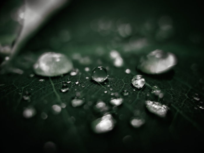Close-up of water drops on leaves during rainy season