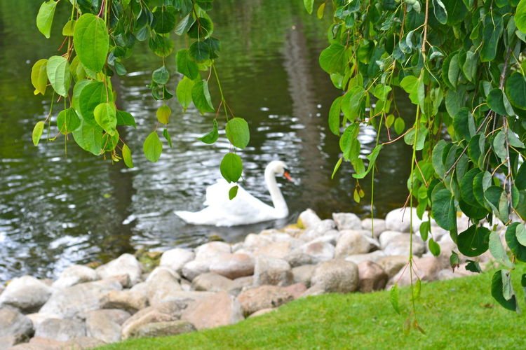 Pond Animal