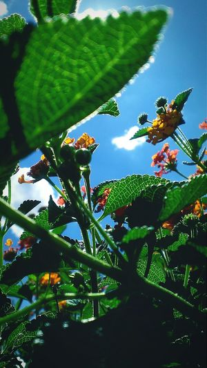 Perspective of an insect. Flowers Checkitout Smartphonephotography Plants Nature Blossom Taking Photos Frommygarden Clouds Sky