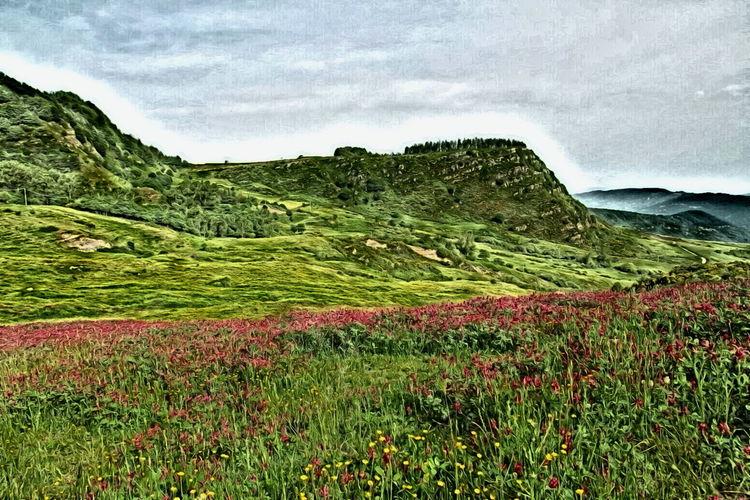 Field Flower Grass Hill Idyllic Landscape Mountain Outdoors Sky Tranquil Scene Tranquility