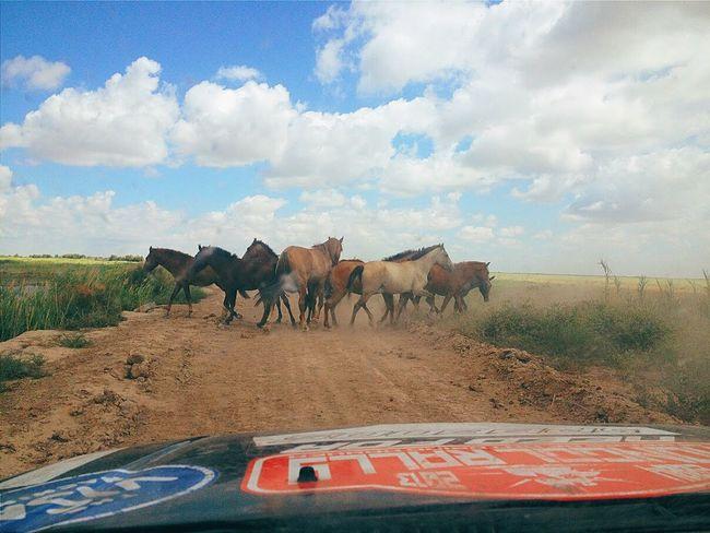 Wild horses of Uzbekistan Car Road Cloud - Sky Outdoors Horse Horses Wildhorses Mongolrally Driving Wild Jimny Jimny4x4 Suzuki Uzbekistan EyEmNewHere