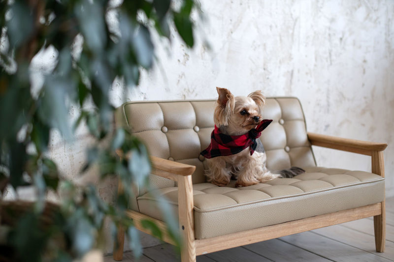 Dog sitting on chair against plants