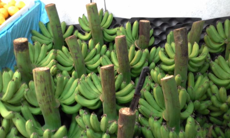Can You Find Me?  Knife Green Bananas Green Color No People Food And Drink Growth Food Fruits Freshness Day Healthy Eating Nature Close-up Outdoors Kedah Malaysia Malaysia