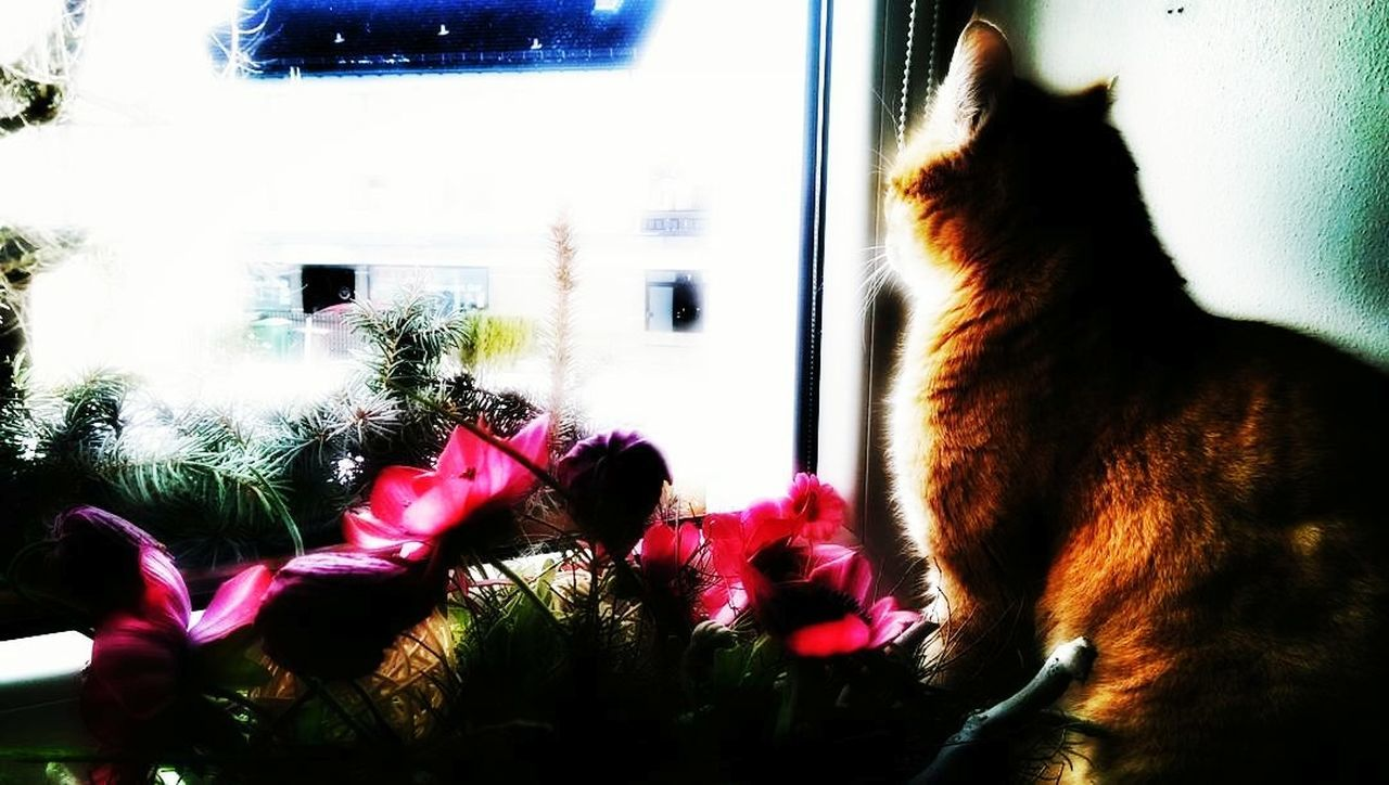 pets, animal themes, domestic animals, window, mammal, one animal, domestic cat, no people, indoors, day, looking through window, feline, sitting, friendship, nature