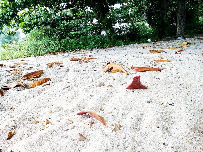 beachhhhhh ☀🌊 Sand Beach Outdoors Day Nature No People Tree