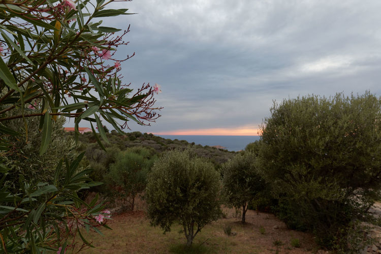 Nature Tree Landscape No People Beauty Outdoors Social Issues Beauty In Nature Day Sky Zörk Travel Destinations Nature Vacations Beauty In Nature Sardegna