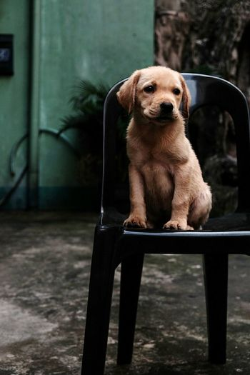 Outdoors Animal Themes Mammal Portrait No People One Animal Cute Pets Looking At Camera Puppy Animal Indoors  Indoors  Indoors  Dog Indoors  Car Indoors