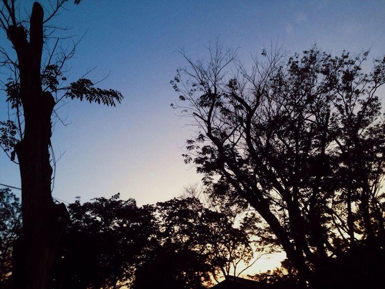 The Essence Of Summer The Great Outdoors - 2016 EyeEm Awards Eyeem Philippines EyeEm Nature Lover EyeEm Best Shots EyeEm Best Shots - Nature Sunset Trees Shadow Darkness And Light EyeEm Cagayan De Oro VSCO Vscocam Mobilephotography Eyeem CDO