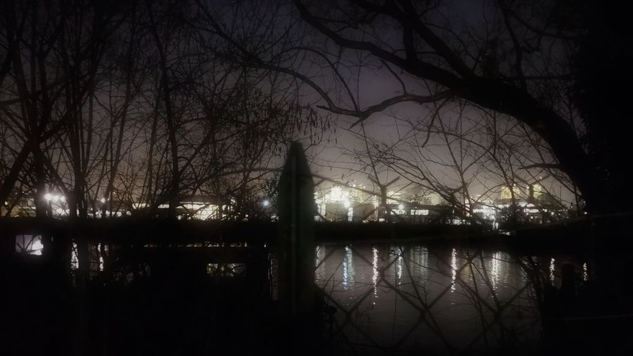 Reflections Nightphotography City Lights Lights Riverside River View River Tree Water Illuminated Branch City Sky