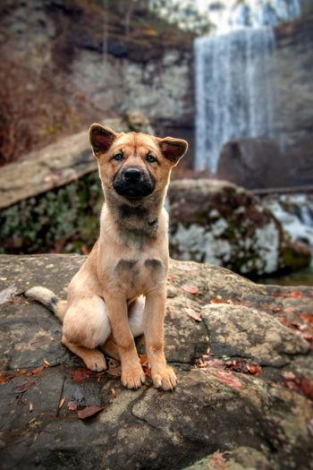 Portrait of dog sitting on rock
