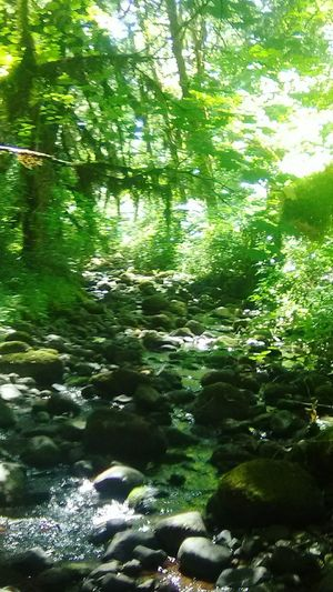 beautiful Oregon woods in july! The Great Outdoors - 2018 EyeEm Awards Water Tree Forest Backgrounds Lake Flood Full Frame Reflection Sunlight Rippled Stream