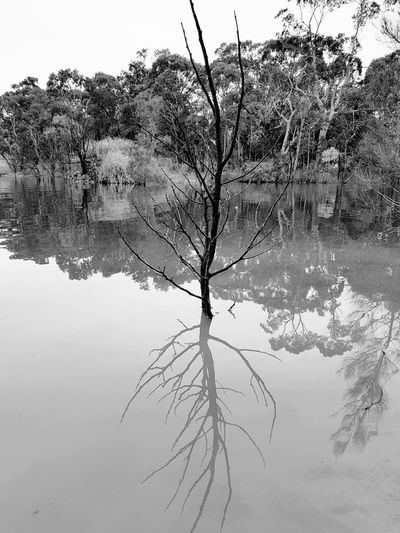 Reflections Tree Nature Outdoors Branch Beauty In Nature Day Lake Rural Scene Water Freshness No People Sky