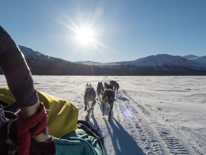 dog sledding POV Beauty In Nature Bright Canada Clear Sky Clear Sky Cold Temperature Day Dog Lens Flare Mode Of Transport Mountain Nature Outdoors Scenics Sky Sled Dog Snow Sun Sunlight Transportation Wilderness Wilderness Adventure Wilderness Area Wildernessculture Yukon Territory