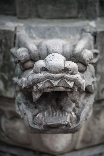 Ancient Animal