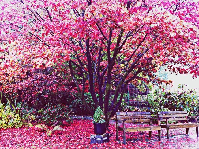 Filippa K Asks: What Inspires You? Colors Of Autumn Clara Filter