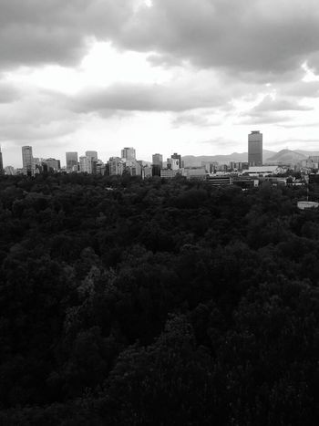 Landscape Downtown District Modern Cityscape Urban Skyline Cloud - Sky City No People Architecture Tree Sky Mexico City Travel Destinations Building Exterior Built Structure Turistic Place Chapultepec CDMX Clear Sky Sky And Clouds Black & White Castillo De Chapultepec Capture The Moment. Enjoy Your Day Beauty In Nature Today ☺ CDMX ❤