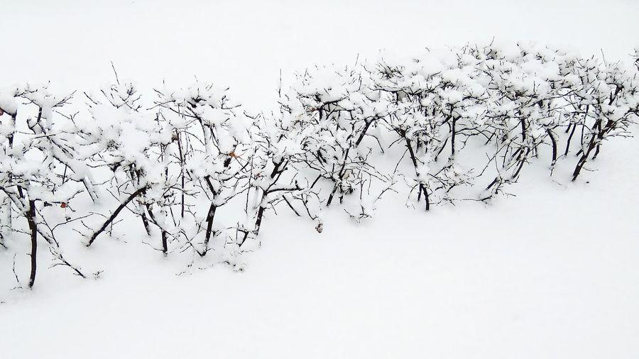 Winter... Snow... No People Winter Snow